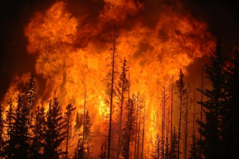 Fires have ravaged California this past month, destroying millions of acres and thousands of homes.